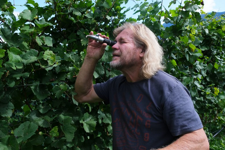 Peter Zoller measuring the sugar content of his grapes with a refractometer.