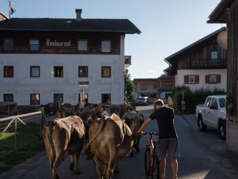 7.53 A.M. On the mooooove! Cows cross the village of Forchach early in the morning.