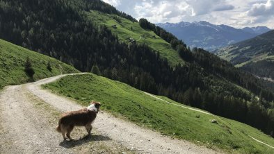 Wanderung Torhelm Gerlos, © Theresia Rahm