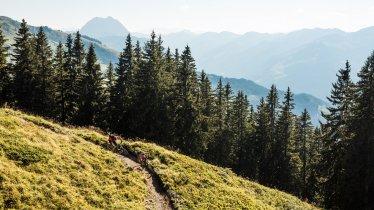 Fleckalm Singletrack Trail in Kirchberg, © Eye5 / Carlos Blanchard