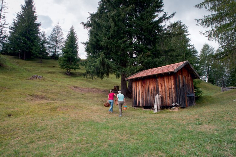 Foraging in Tirol's natural lanscape.