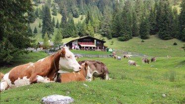 Almenparadies im Gaistal in Leutasch, © Bergidyll  & Hotel Trofana