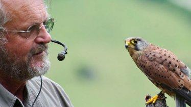 Birds of Prey Park in Telfes im Stubai, © Greifvogelpark Telfes