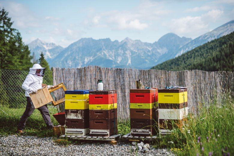 Reinhard Hetzenauer with his beehives in the Axamer Lizum shortly before taking out the honeycombs. In the background you can see the Karwendel mountain range.