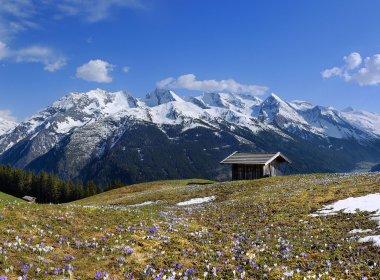 Frühling in Tirol
