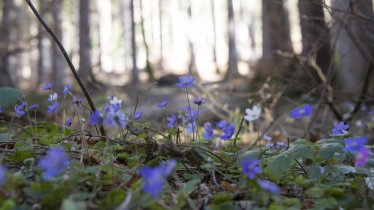 Katin meadows, © Tirol Werbung / Angela Fuchs
