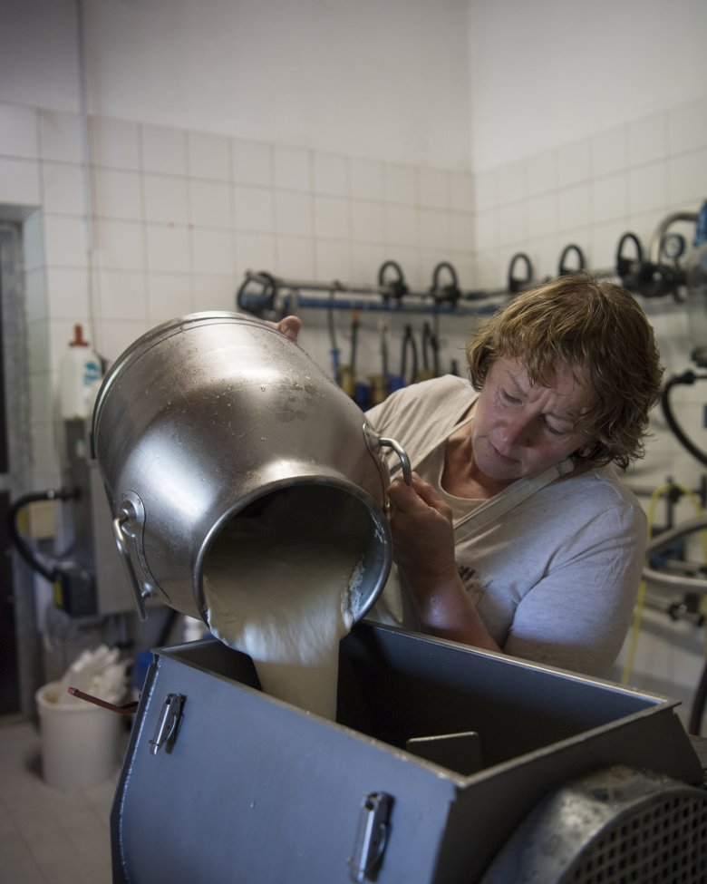 45,000 liters of rich, creamy, high-quality milk are made into amazing cheese and dairy produce each summer.