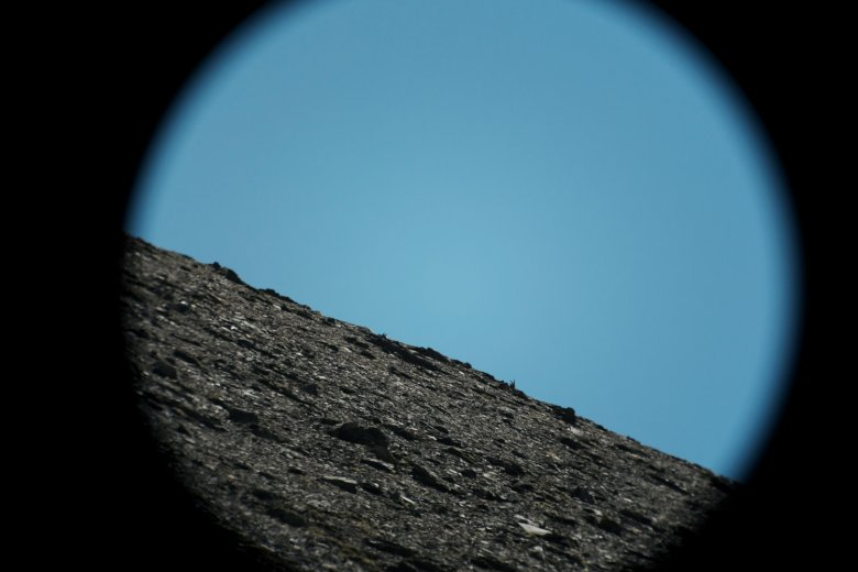 ibex in our sights.
