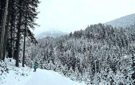 Sledding Runs in Tirol