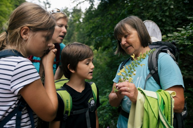 Guide Elfie tells the children about local plants such as puzzlegrass, field scabious and butterburs.