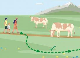Correct Behaviour Part 6, © Landwirtschaftskammer Tirol