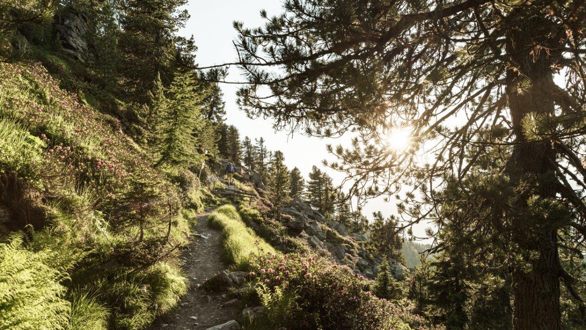 On the Zirbenweg Trail