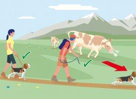 Correct Behaviour Part 4, © Landwirtschaftskammer Tirol