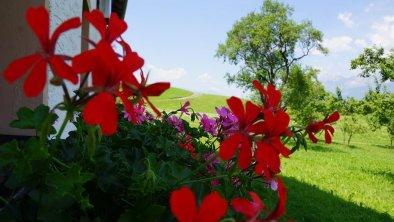 Pfunerhof, Blumen/Garten
