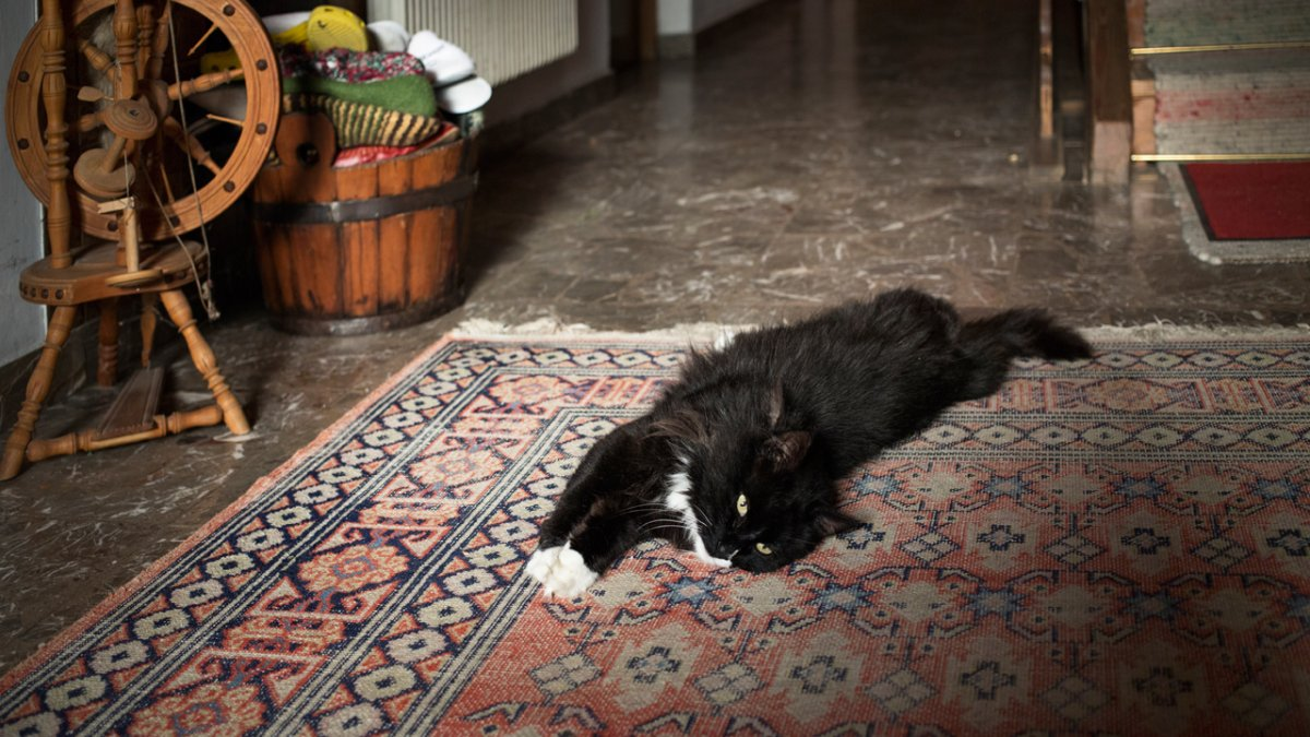 The farm's cats can teach visitors a thing or two about relaxing., © Tirol Werbung/Lisa Hörterer