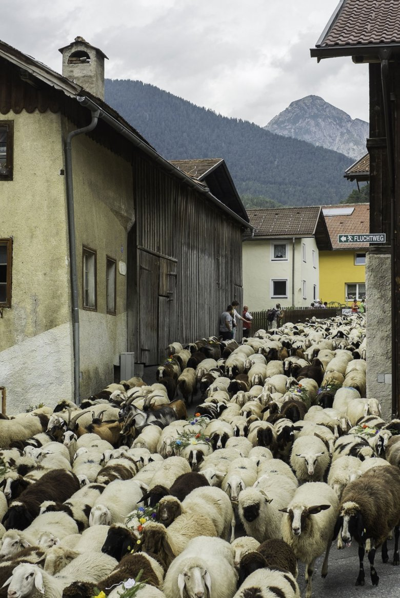 Around 1,000 lambs and sheep are driven down from the Hinterberg-Alm hut to the village of Tarrenz on the second Sunday in September.