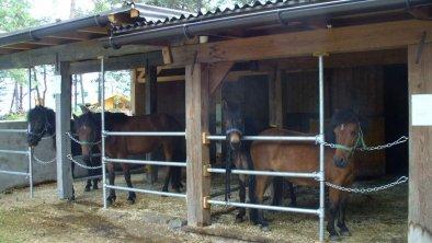 unsere Ponies, © FF Bauer