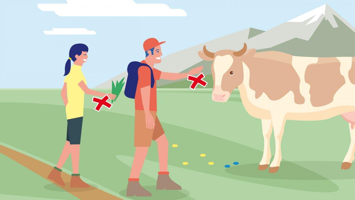 Correct Behaviour Part 1, © Landwirtschaftskammer Tirol