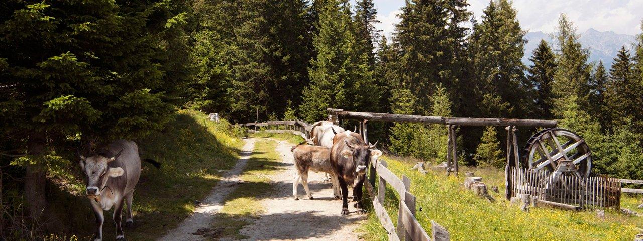 The Family Park, © Tirol Werbung/Frank Bauer