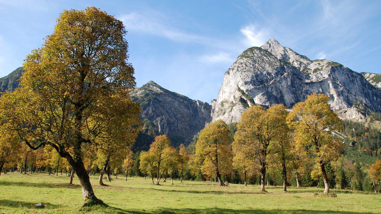 Großer Ahornboden in the Karwendel Nature Park, © Silberregion Karwendel