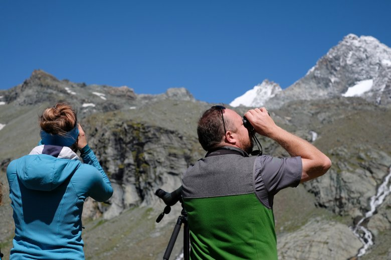 Searching for marmots.