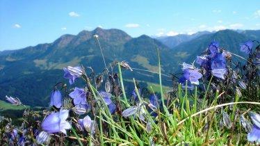 Flower learning trail on the Buchensteinand mountain, © Kitzbüheler Alpen Marketing