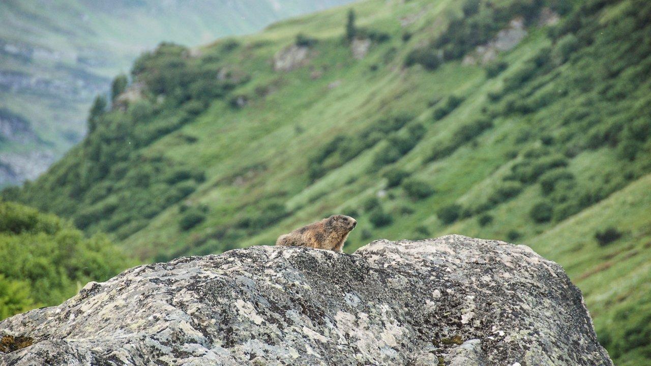 Nature Watch in Kaunergrat Nature Park, © Tirol Werbung / Jannis Braun