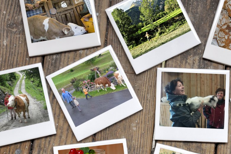 Guests and visitors are sending Regina Bauer photos of their farm vacation.