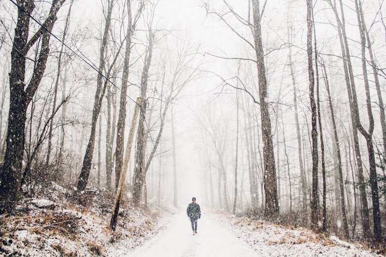 Studies have shown that the forest has a calming effect on the mind, both in summer and winter. Photo: Elijah Hail