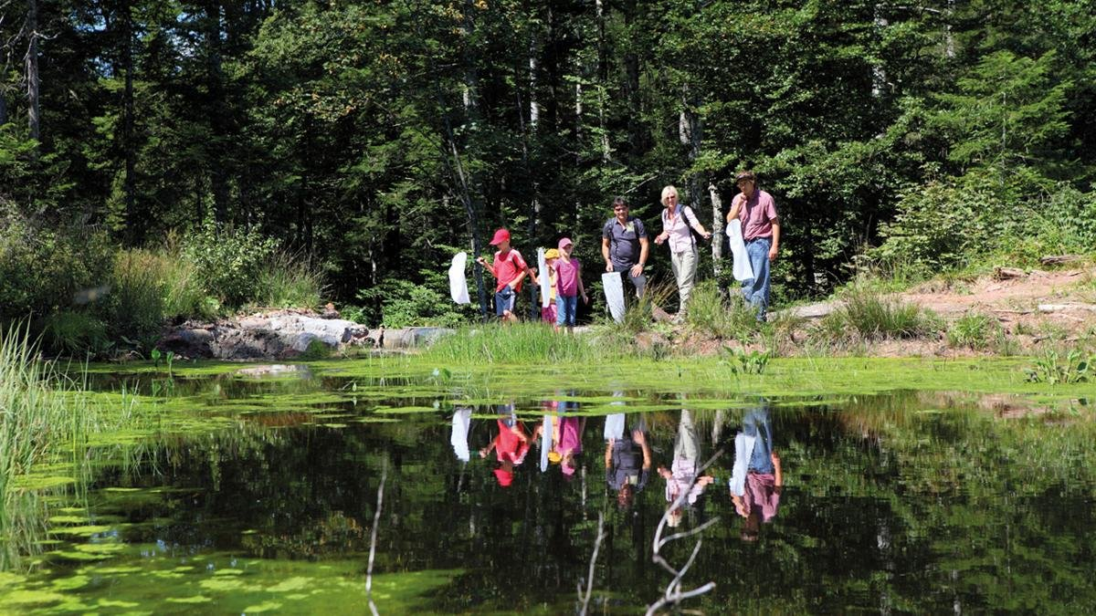"""The """"Moor & More"""" themed hiking trails are an entertaining way for families to learn about the flora and fauna in and around the moorlands at the foot of the Wilder Kaiser Mountains., © Hannes Dabernig"""