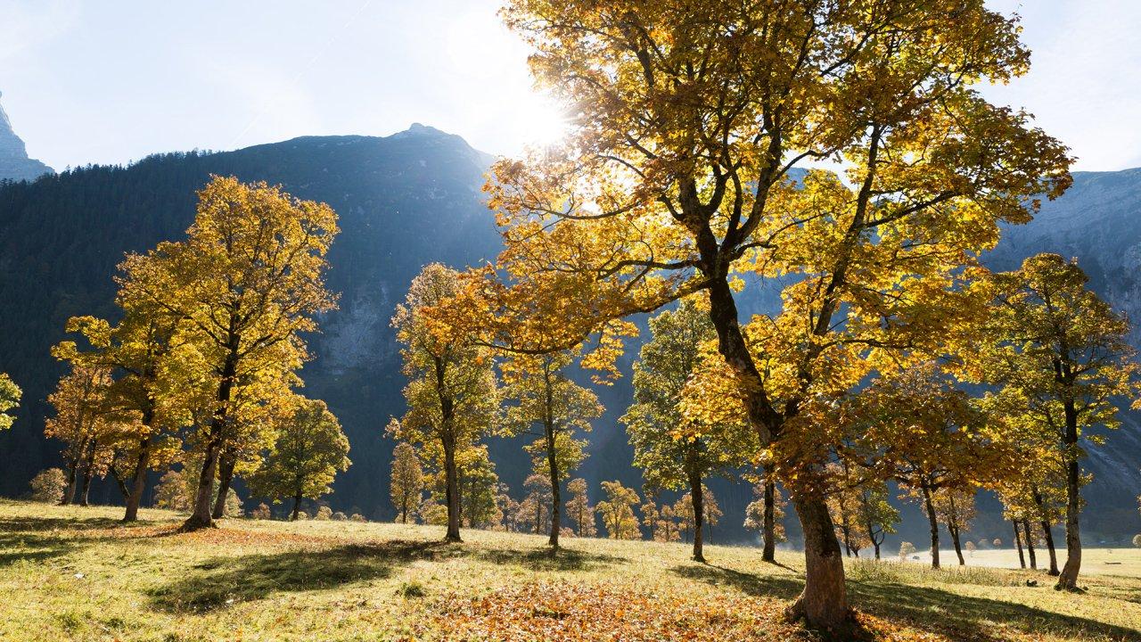 Großer Ahornboden in autumn, © Tirol Werbung/W9 studios