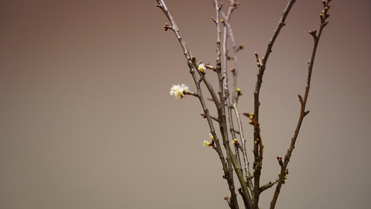 Lucky Charms: cherry tree branches, © Tirol Werbung