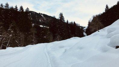 Spuren im Schnee, © Martin Reiter