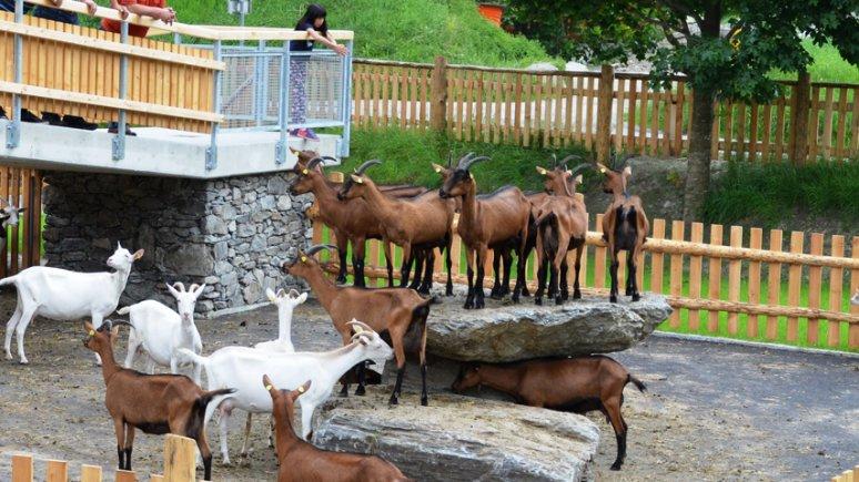 Working dairy farm open to visitors, © ErlebnisSennerei Zillertal