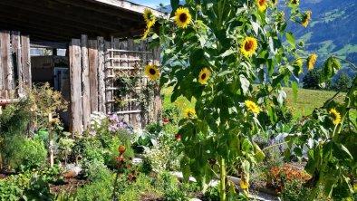 https://images.seekda.net/AT_UAB7-09-09-03/Sonnenblumen.jpg