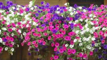 IMG_0289, © Blumen am Balkon