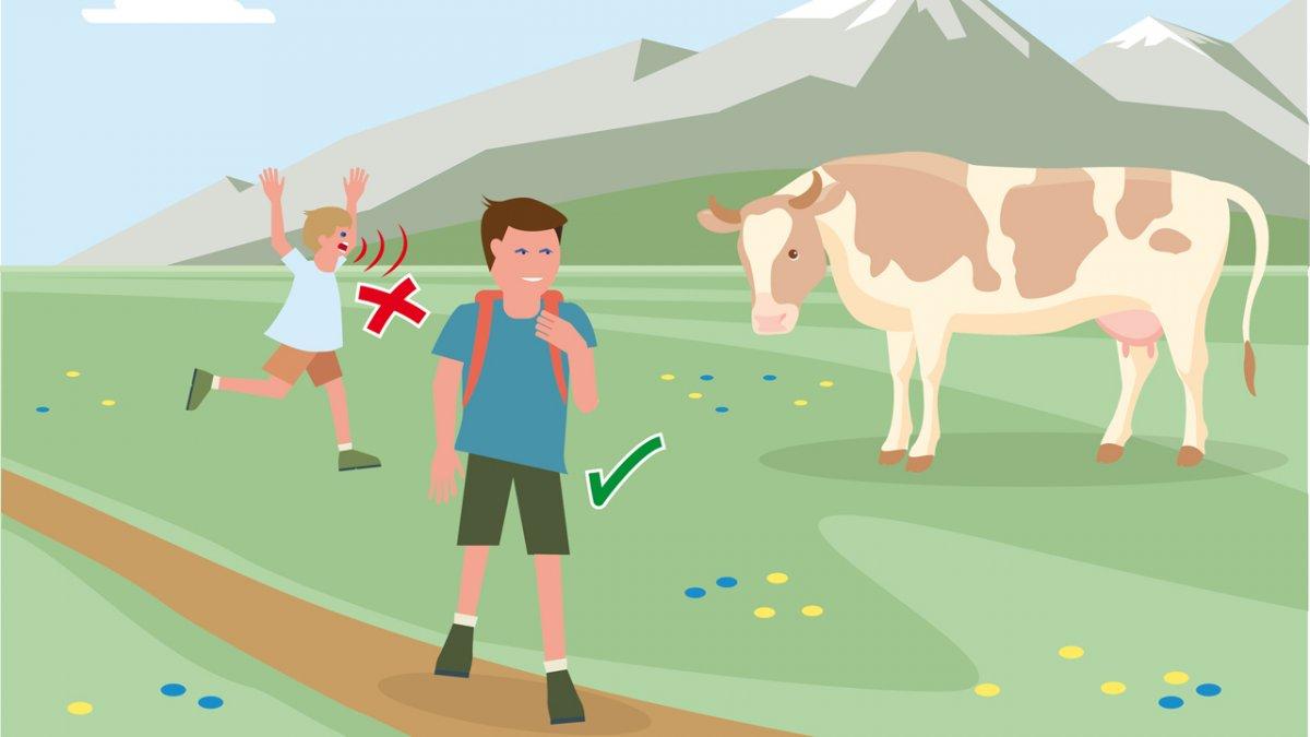 Correct Behaviour Part 2, © Landwirtschaftskammer Tirol