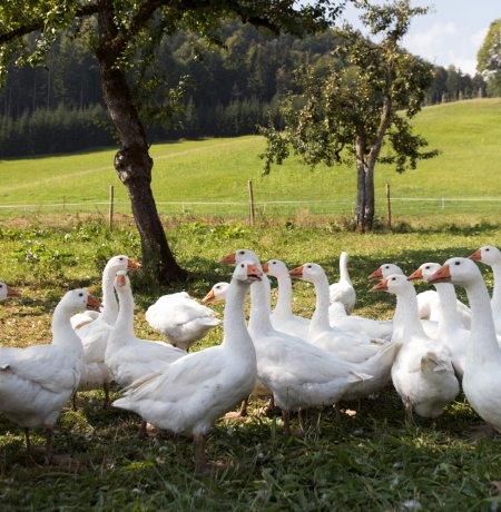 The Lindhof farm near Kufstein, © Tirol Werbung/Bert Heinzlmeier