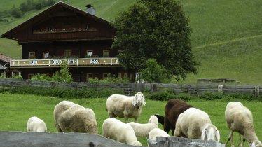 Osttiroler Berglamm (East Tirol Mountain Lamb), © Tirol Werbung/Bernhard Aichner