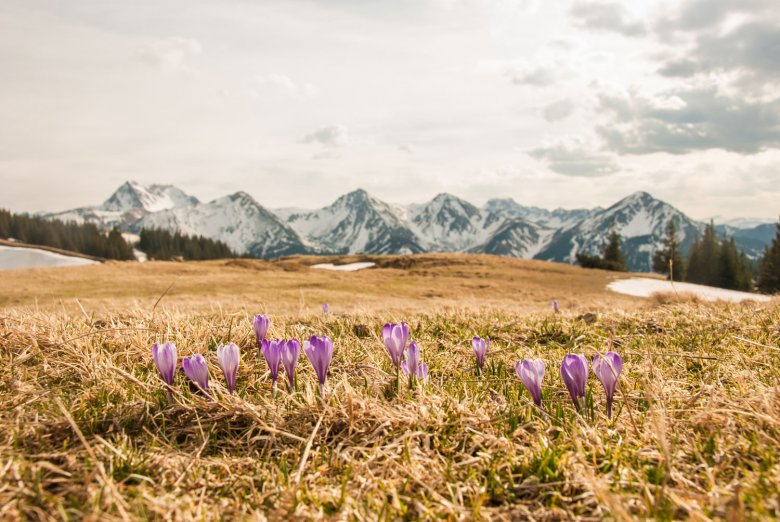 Spring in Tannheimer Tal Valley.