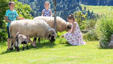 Unsere Schafe Wasti und Heidi