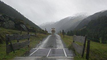 On the way to the Feldalphorn mountain, © Tirol Werbung/Ziegler Alexander