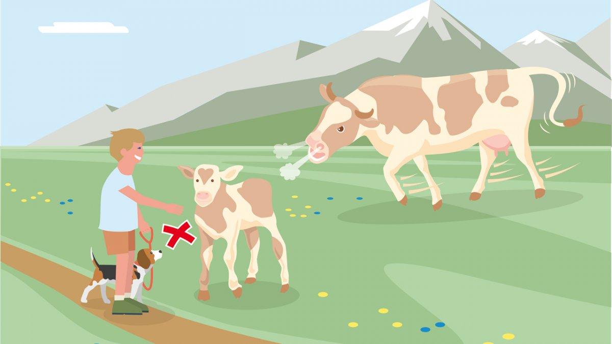 Correct Behaviour Part 3, © Landwirtschaftskammer Tirol