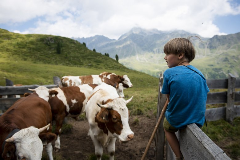 Early practice: Janis' son Quirin tries his hand at cow herding.