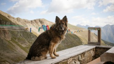 Dog in the mountains, © Jens Schwarz