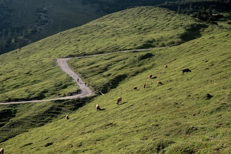 Rocky and steep – the climb to the Plumsjoch ridge in the Karwendel Mountains offers perfect conditions for gravel bikes.