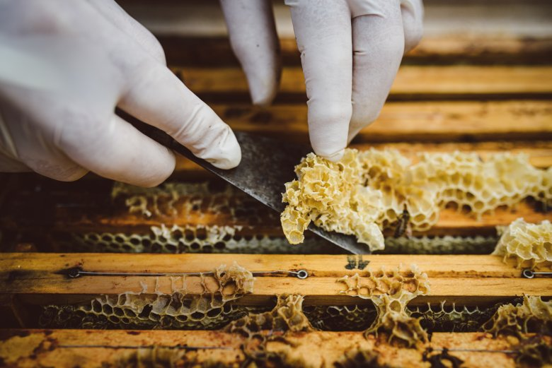 The overhanging wax is being removed in order to take off the honeycomb without harming the bee colony.