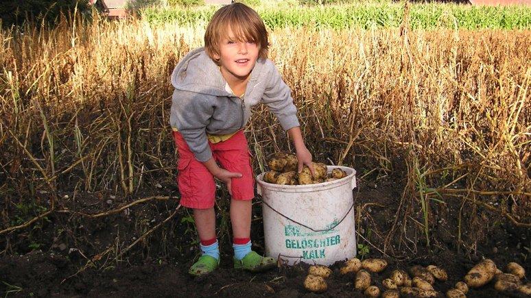Osttiroler Kartoffel (East Tirol Potatoes), © Bezirkslandwirtschaftskammer Lienz